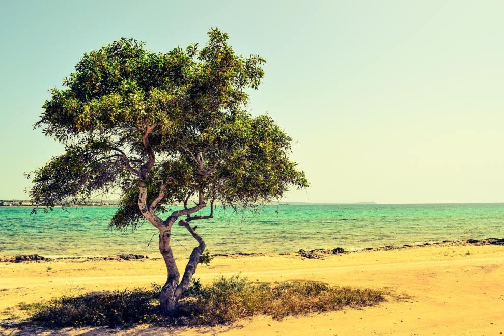 My first trip to aruba one happy island vacation trips