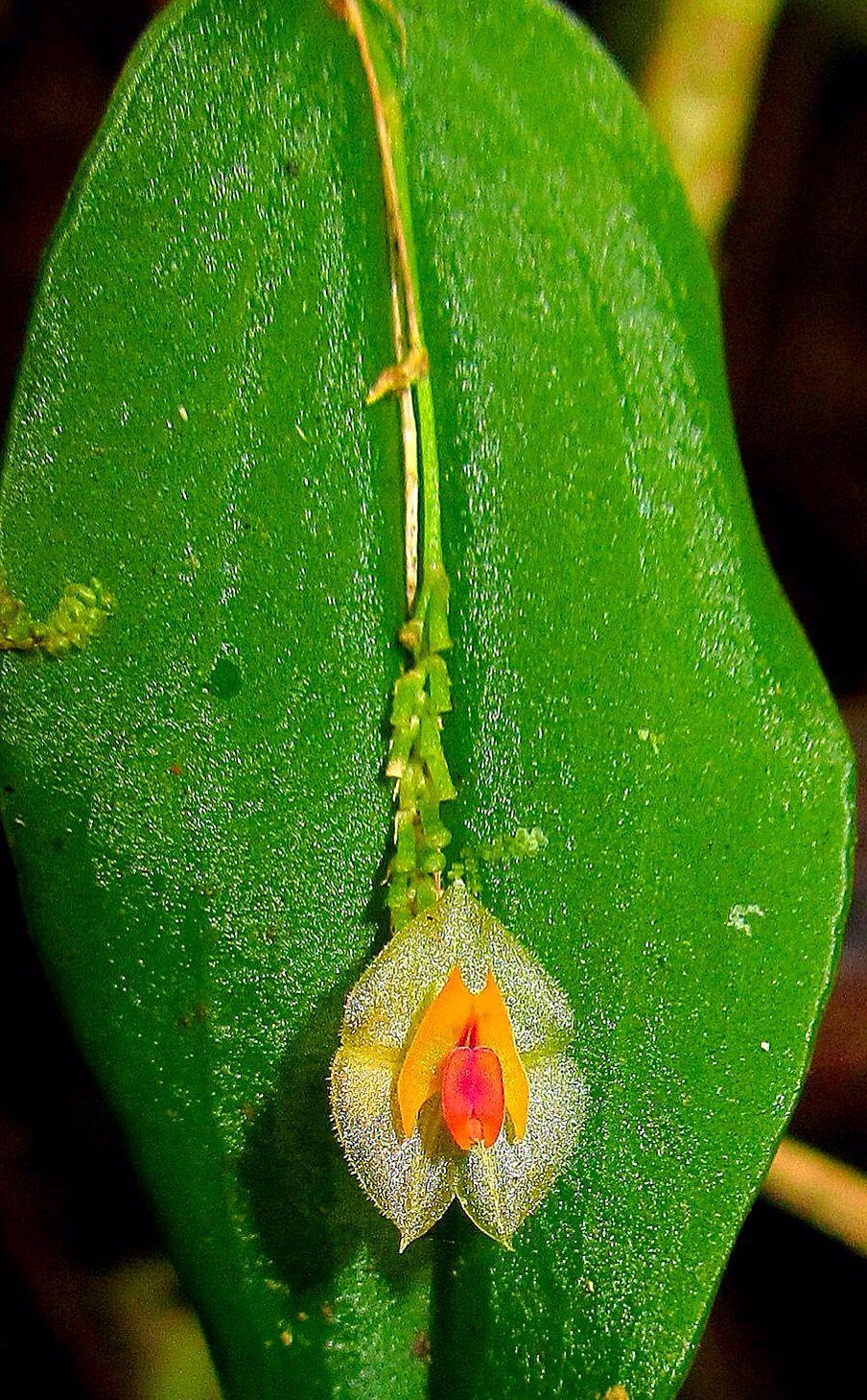 Pin by jenny brackin on orchids pinterest