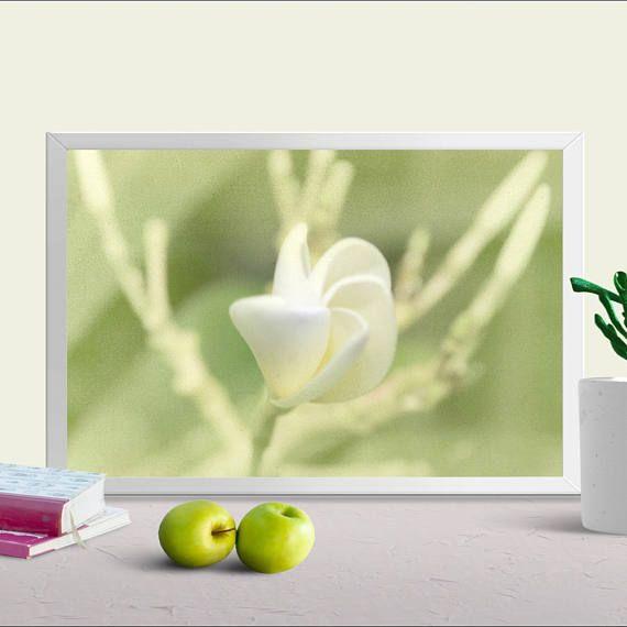 Instant Digital Download, Frangipani Print, PRINTABLE White Flower ...