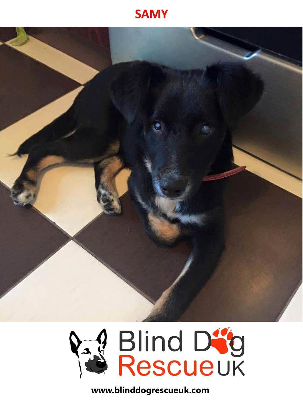 Adopt A Blind Dog Dog Rescue Uk Blind Dog Dog Adoption