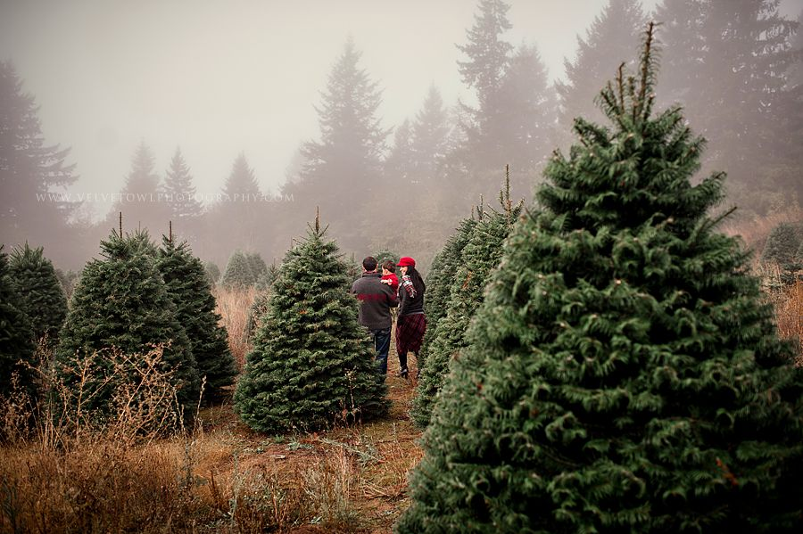 The Most Wonderful Time Of The Year…. :: {Portland Oregon ...