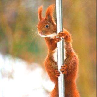 Pole dance ❤
