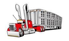 Big Rig Flatbed Cartoon | Peterbilt Big Rig Semi Truck Cartoontees Tshirt 1033 Livestock Hauler