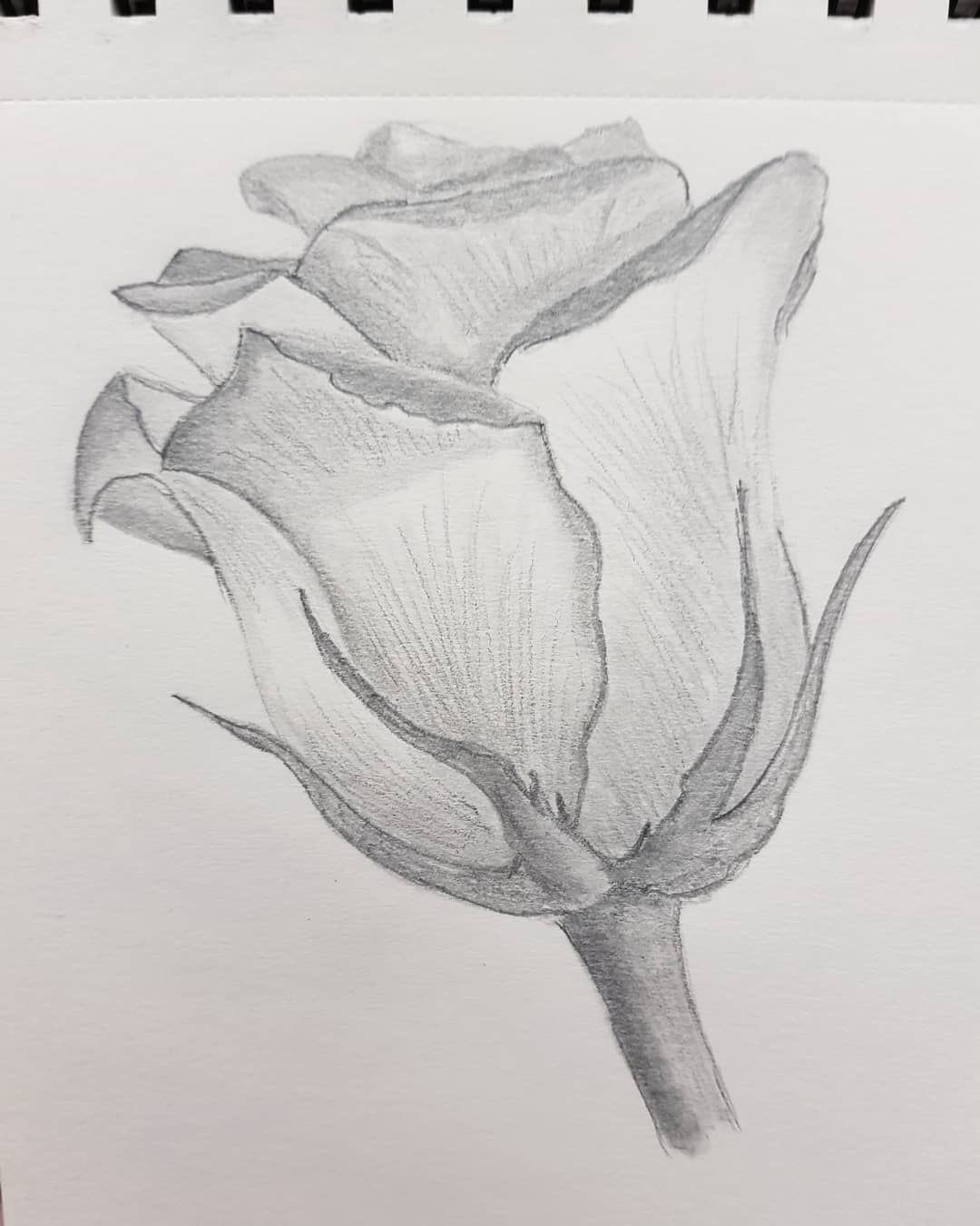 My First Pencil Drawings Pencil Drawing Draw Flowers Rose