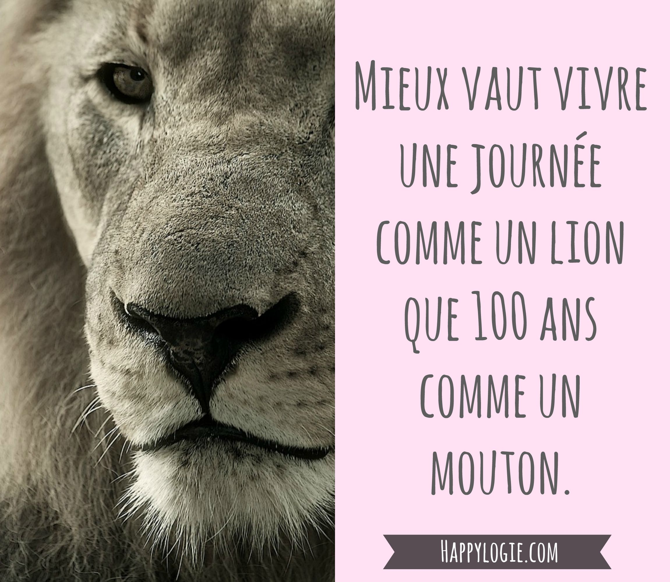 Citation En Français Mieux Vaut Vivre Une Journée Comme Un