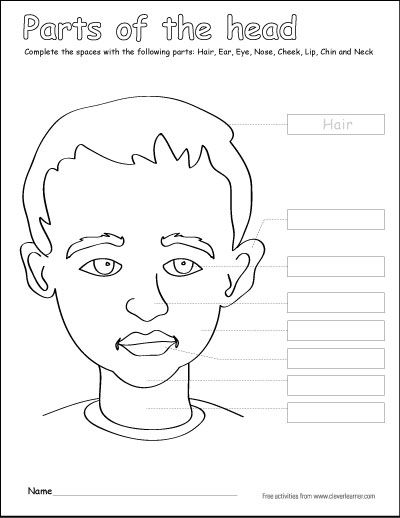 Parts of the human head label and color activity for 1st ...