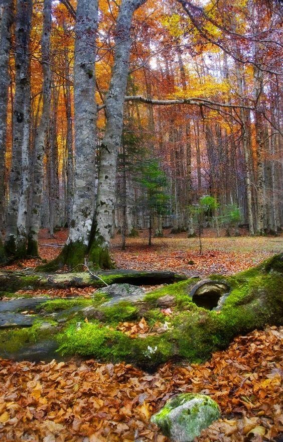 Parque Nacional De Ordesa Y Monte Perdido Paisajes De España Parques Nacionales Parques Naturales España