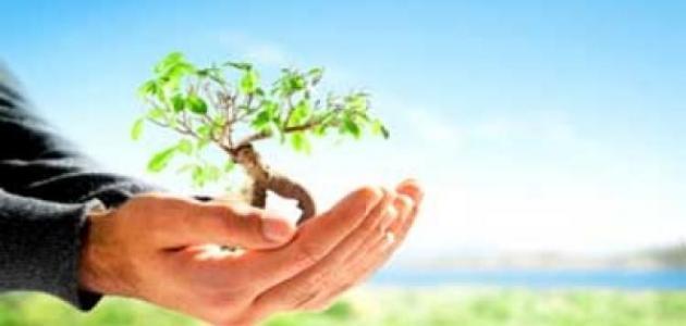 بحث حول البيئة Environment Holding Hands