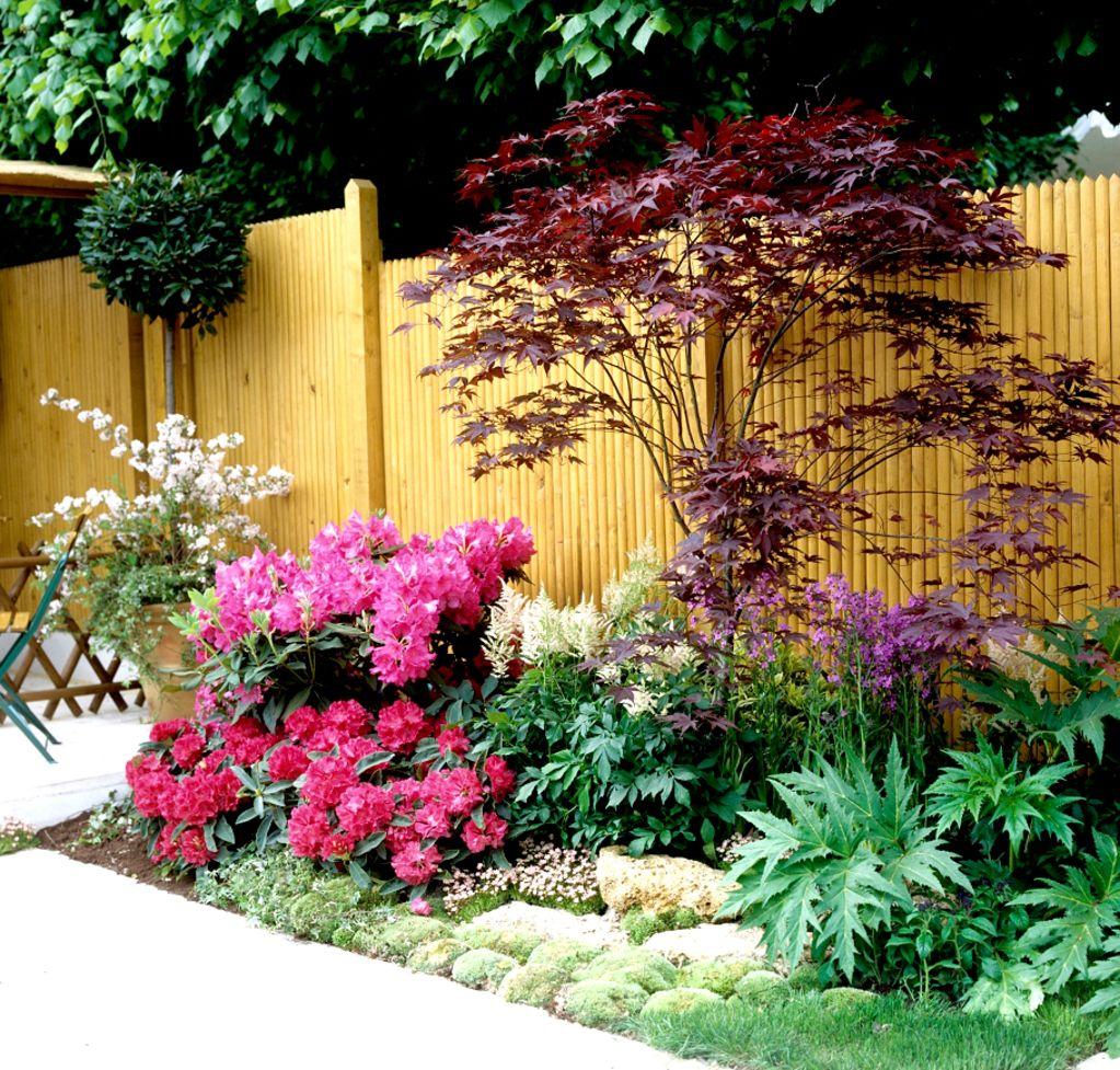 Le dictionnaire des plantes par rable du for Massif jardin japonais