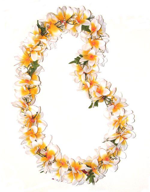 Fresh Hawaiian Orchid Leis Loose Orchid Blooms Plumeria Flower Lei Flower Photos