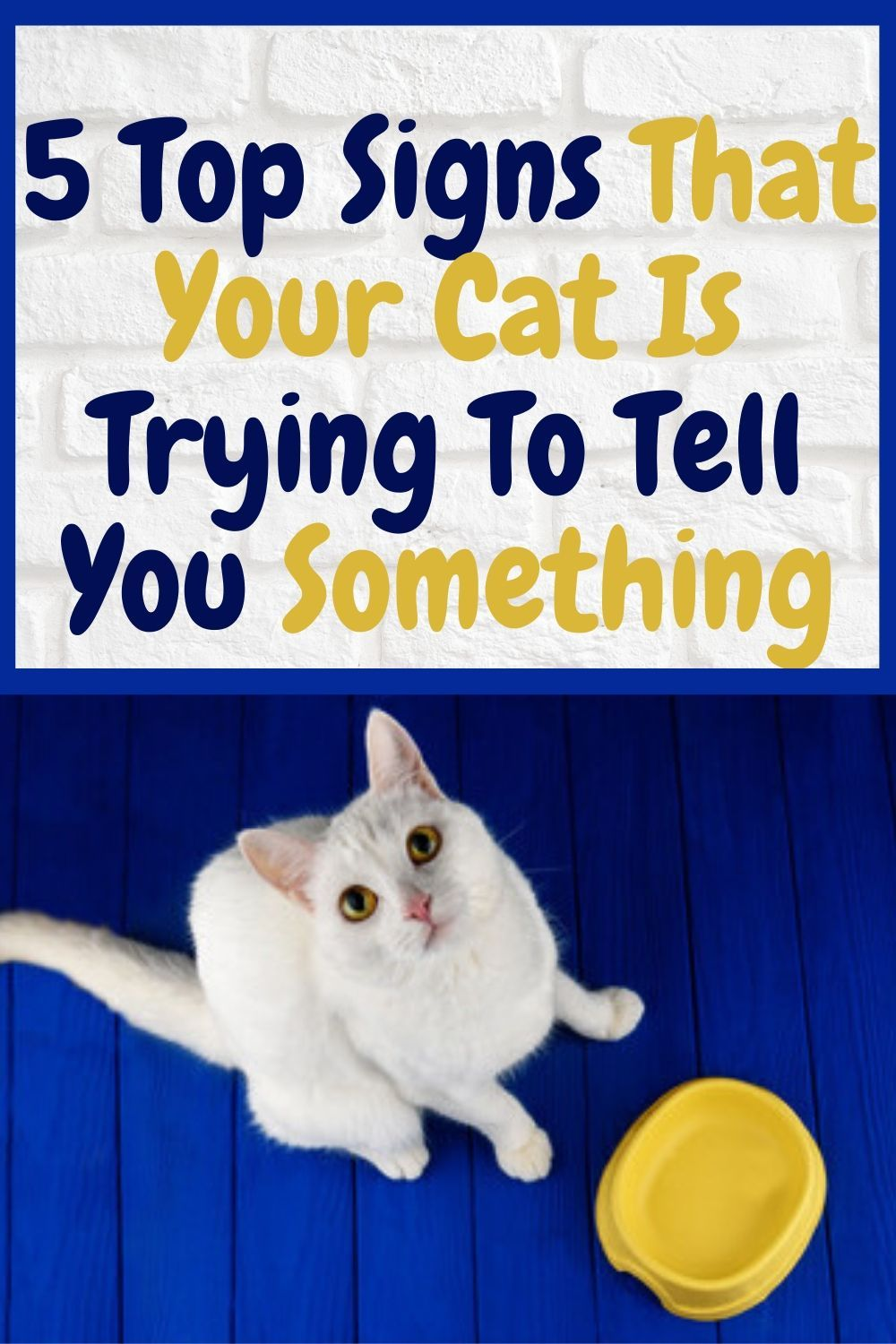 5 Top Signs That Your Cat Is Trying To Tell You Something Welfar4us In 2020 Cute Cats And Kittens Cat Language Cat Facts