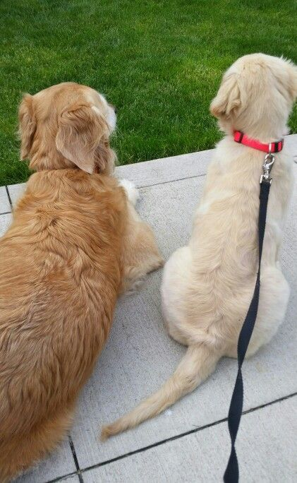 Big sis (8 yr old- Rosie) & her little sis (11 wk old- Ivy) squirrel & bird watching in the early morning together ;)