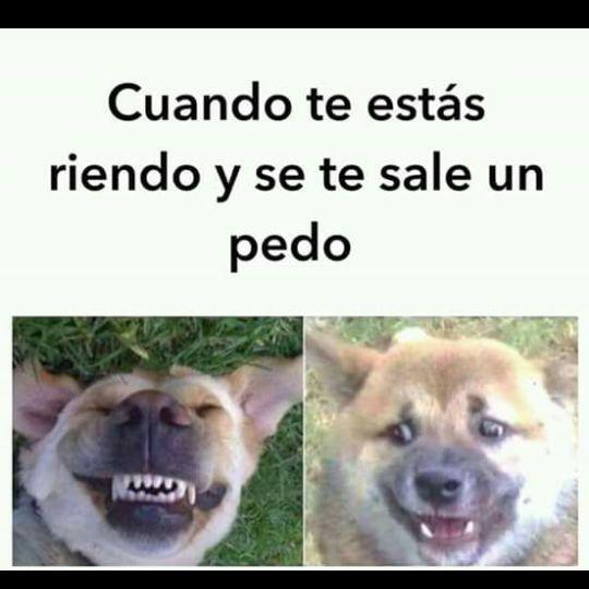 Ay Chihuahua Funny Spanish Memes Animal Memes Memes