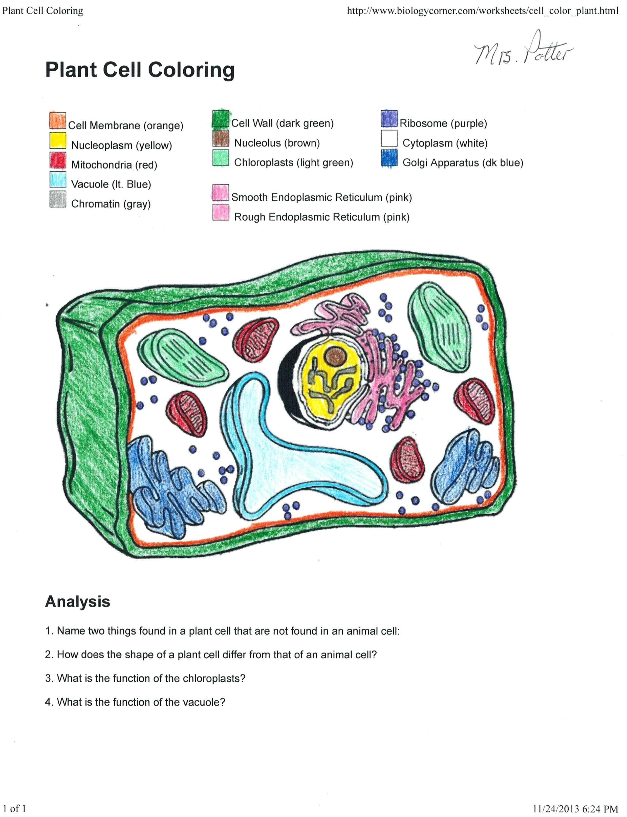 Plant Cell Coloring Key New Biology Coloring Sheet