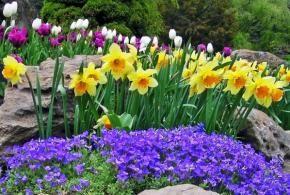 Gestalten Sie Ihre Eigene Gartenschau Blumen Garten Bilder Fruhlingsgarten Schoner Blumengarten