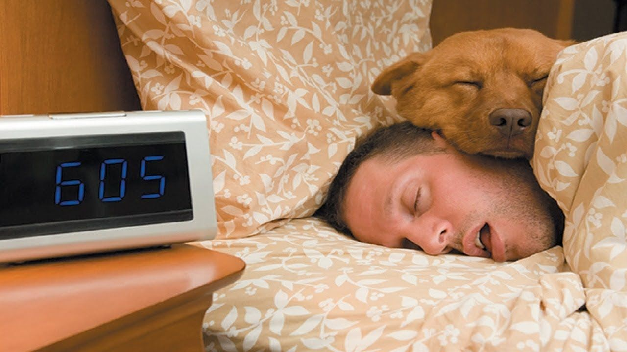Dogs sleeping with owner top funny animal dog sleeping