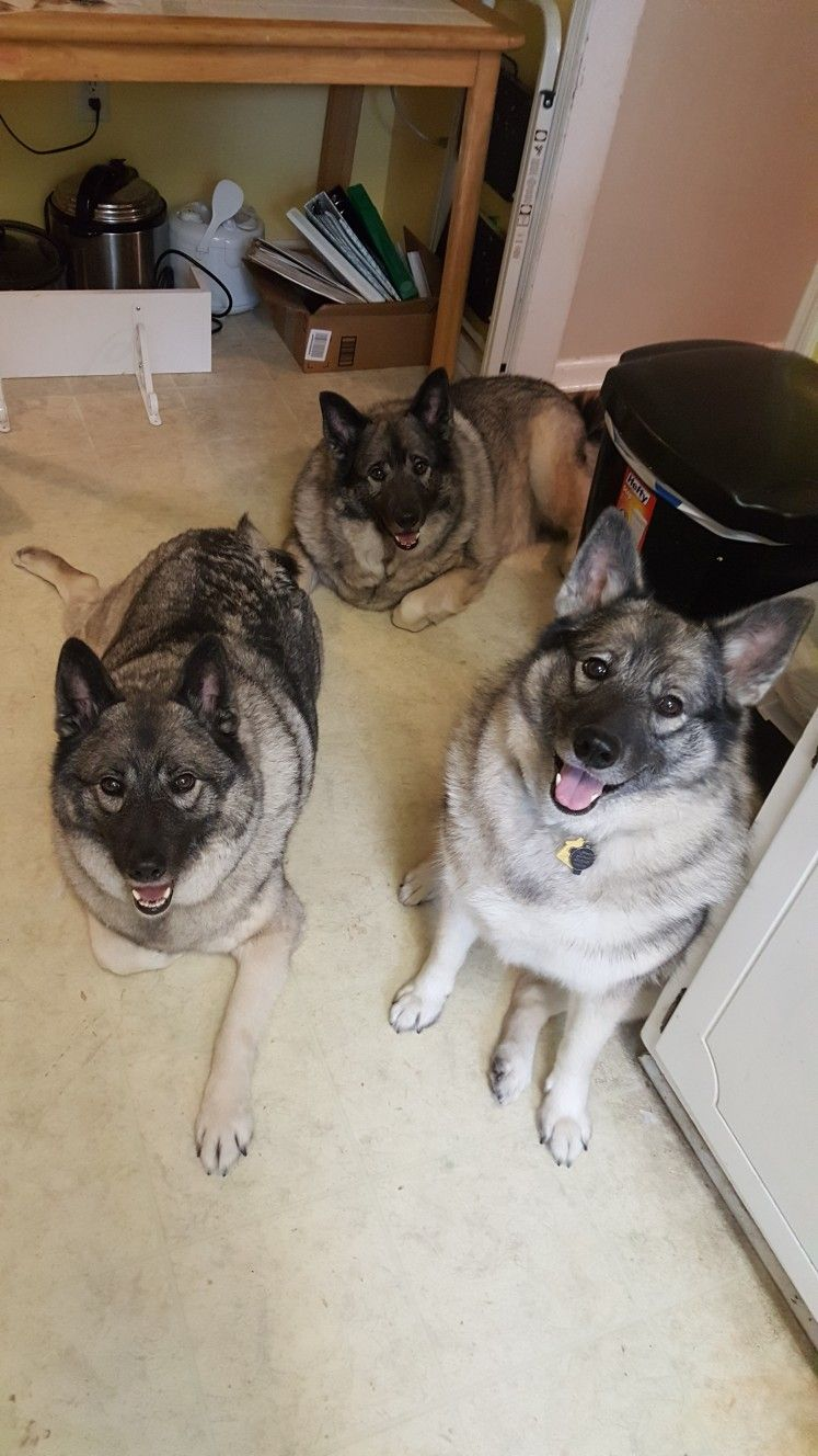 (Left to right) Mordred, Cerberus and Excalibur