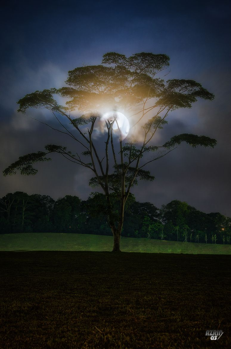 Moonshine Tree, by Azrin Az.