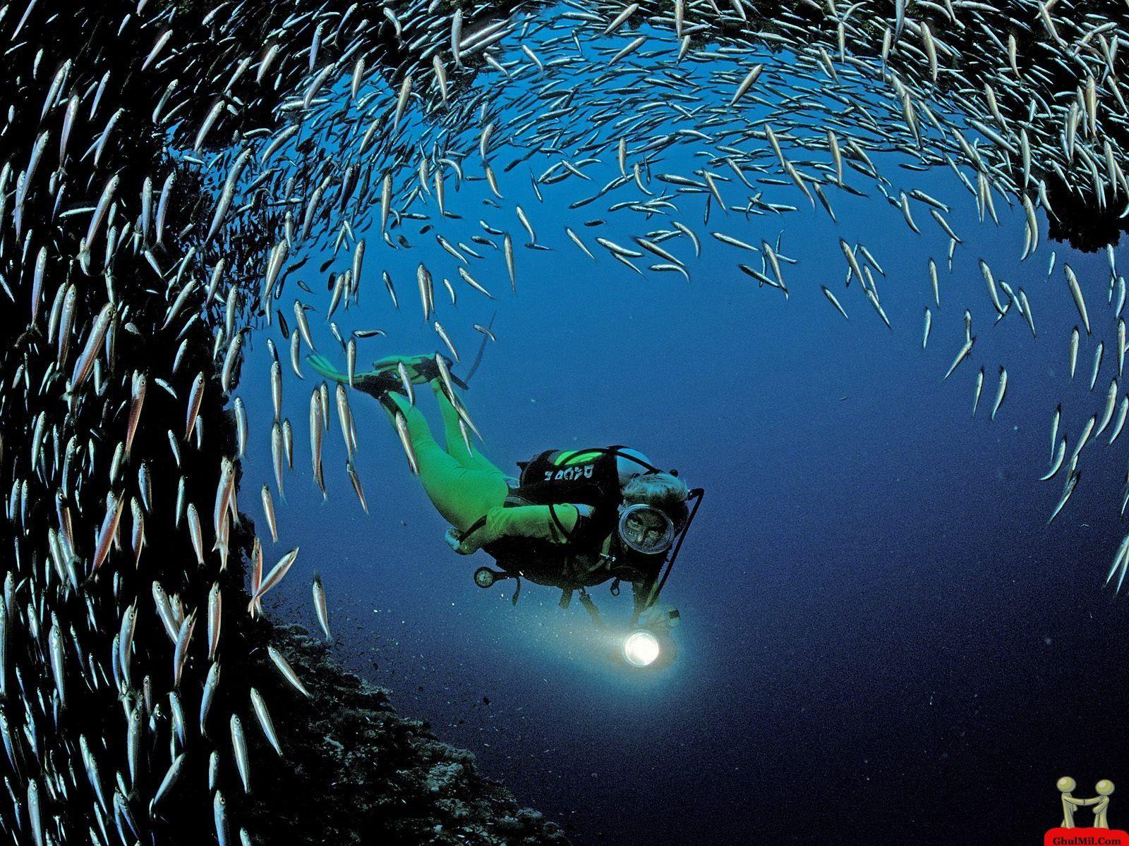 amazing hd man amoung thousand fish amazing hd wallpaper   beauty in