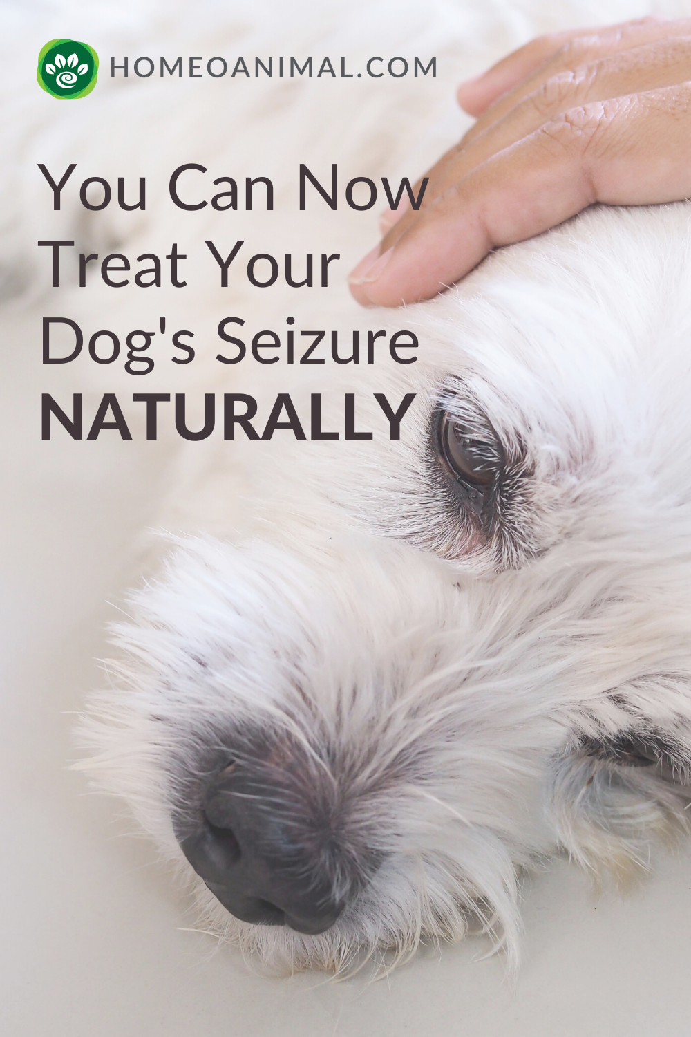 You Can Now Treat Your Dog S Seizures Naturally In 2020 Dog Seizures Dog Dry Skin Remedy Epilepsy In Dogs