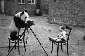 Zvieratá, ktoré zaujíma fotografovanie