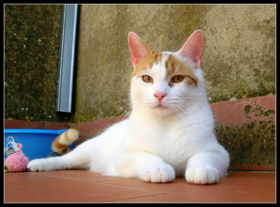 Cristicats, salvando gatos!!!: Balto