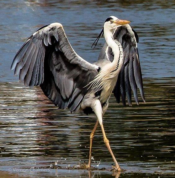 Alles, was diese Tiere tun wollen, ist Tanz (15 Fotos) - #alles #Diese #Fotos #ist #Tanz #Tiere #tun #wollen #cuteanimalphotos