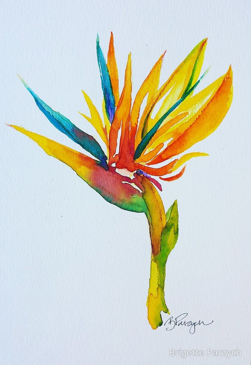 Brigette Adell Parzych Bird Of Paradise Paradise Painting Bird Of Paradise Tattoo Birds Of Paradise Flower