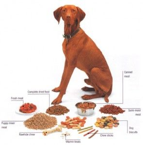 The Quantity Of Dog Food You Feed Your Dog Depends On The Age