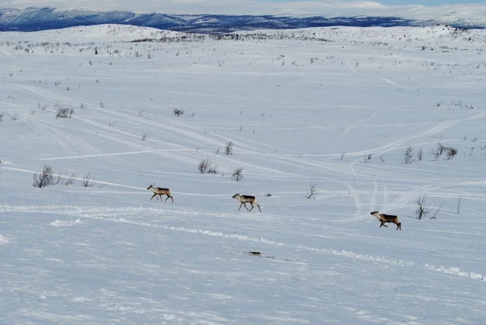 Lappland, Sweden
