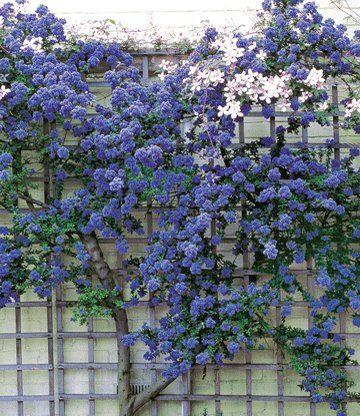 Kletter-Hortensien Pflanzenwunschliste Pinterest Gardens - garten blumen gestaltung