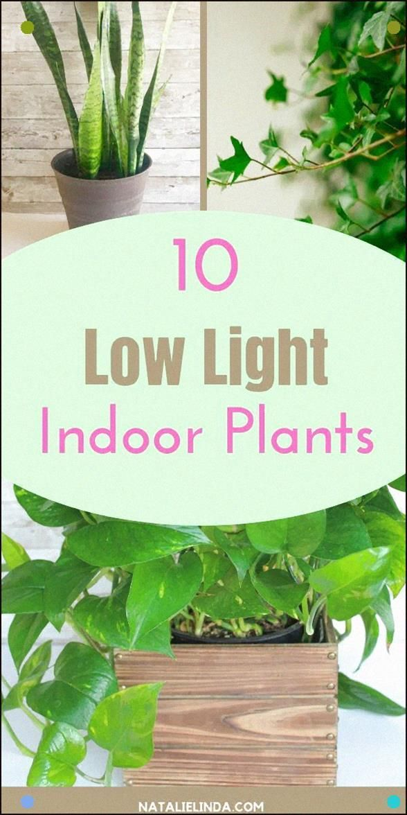 If You Want To Grow Plants In A Low Light Area Of Your Home Or Office, Try One O...#area #grow #home #light #office #plants