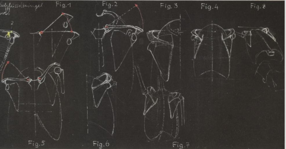Pin de Emily Gordon en Anatomy Gottfried Bammes | Pinterest