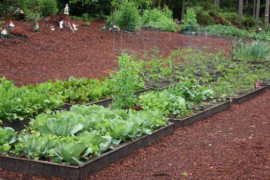 Raised Garden Beds - Beans, Tomatoes, Beets, Carrots, Peas and Radishes Garden Beds - Beans, Tomatoes, Beets, Carrots, Peas and Radishes | One Hu...  - Raised garden beds -