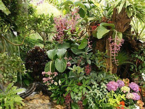 Resultado de imagen para plantas tropicales para jardin Jardín