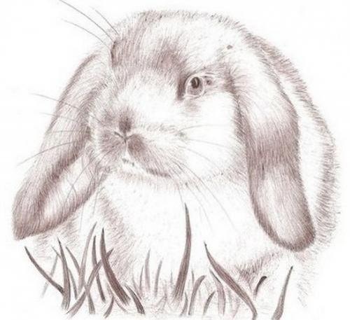 Dessin lapin belier bing images dessin en 2019 pinterest dessin lapin dessin et lapin - Dessins lapins ...