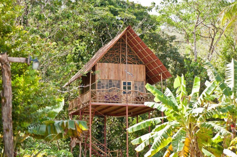 De Magische Boomhut : Epic treehouses from around the world boomhutten en boomhut