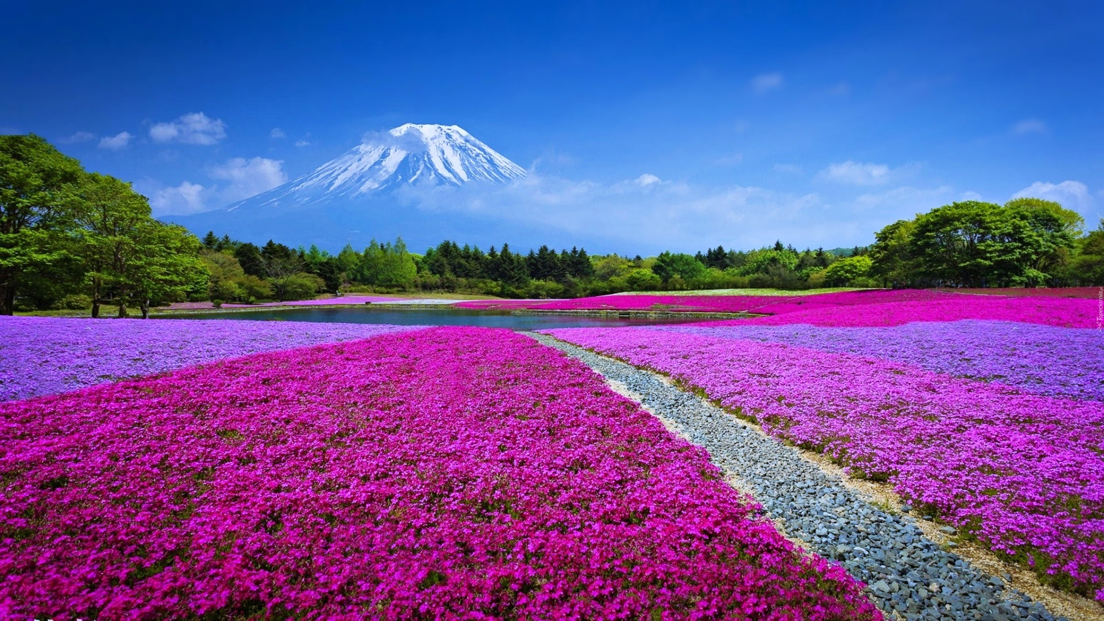 Http Www Tapeciarnia Pl Edycja 109301 Beautiful Flowers Daffodil Flower Daffodils