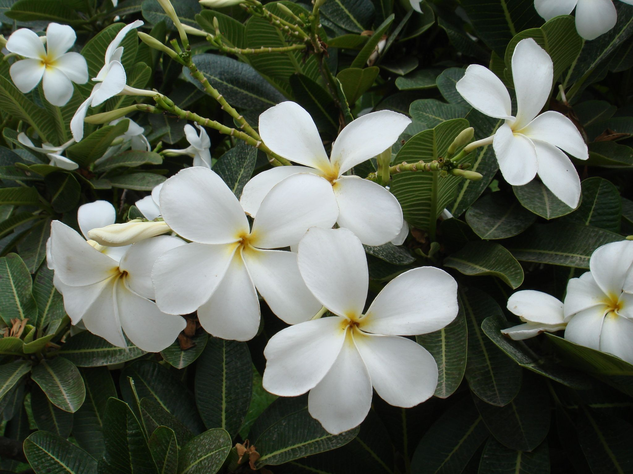100 types of the most beautiful white flowers for your garden best types of white flowers white is taken into consideration as a binding and mirroring shade as it reflects all the lights as well as goes well with any type mightylinksfo