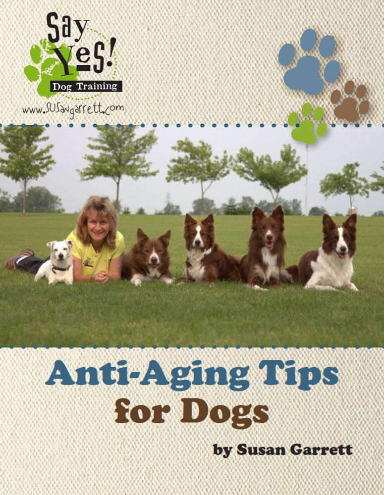 Anti Aging Tips For Dogs By Susan Garrett 1 20 Http Www