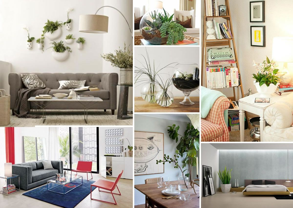 Decorating With Houseplants Zee S Super Likes Indoor