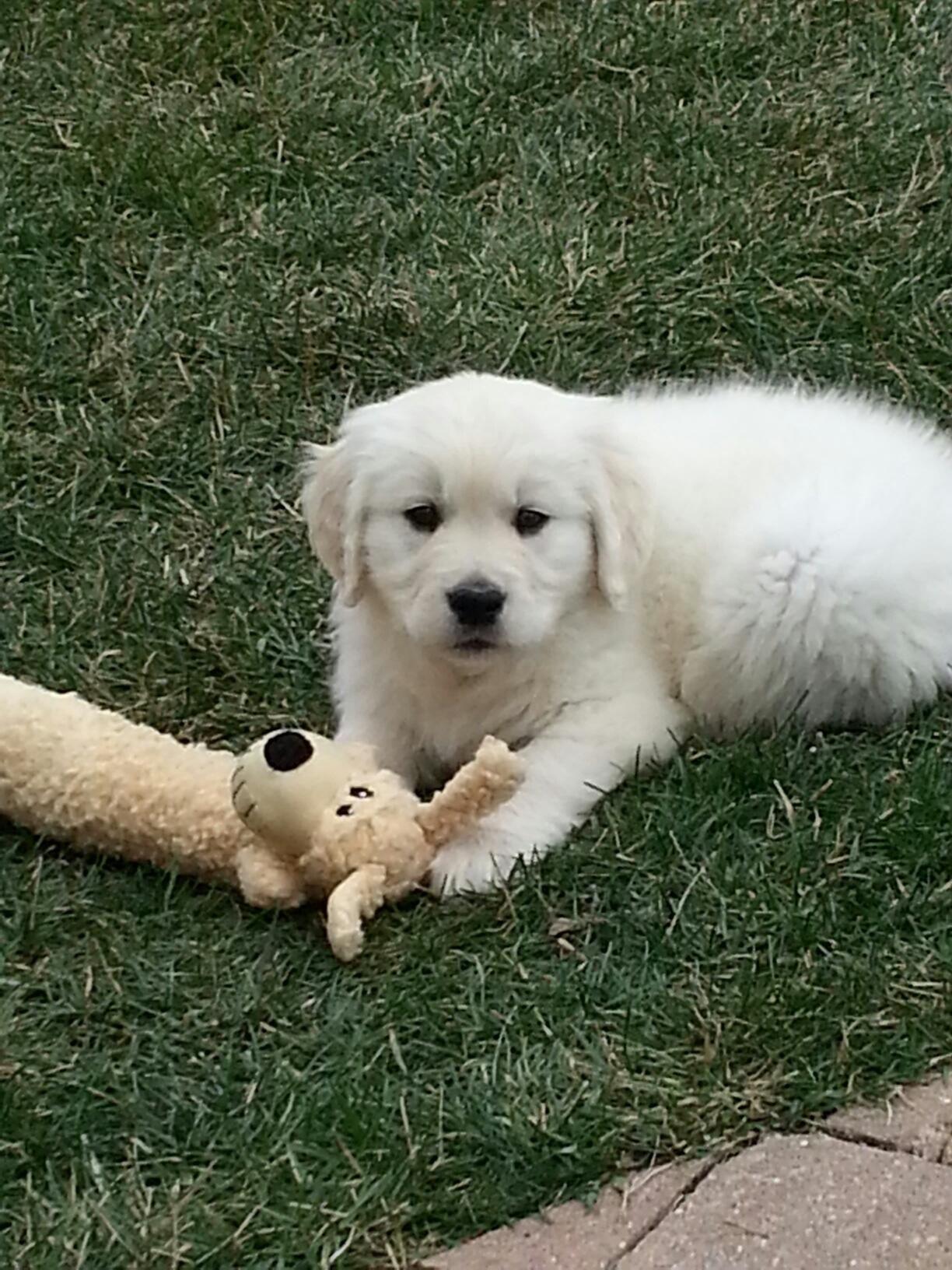 My new puppy, Reign.....love him!