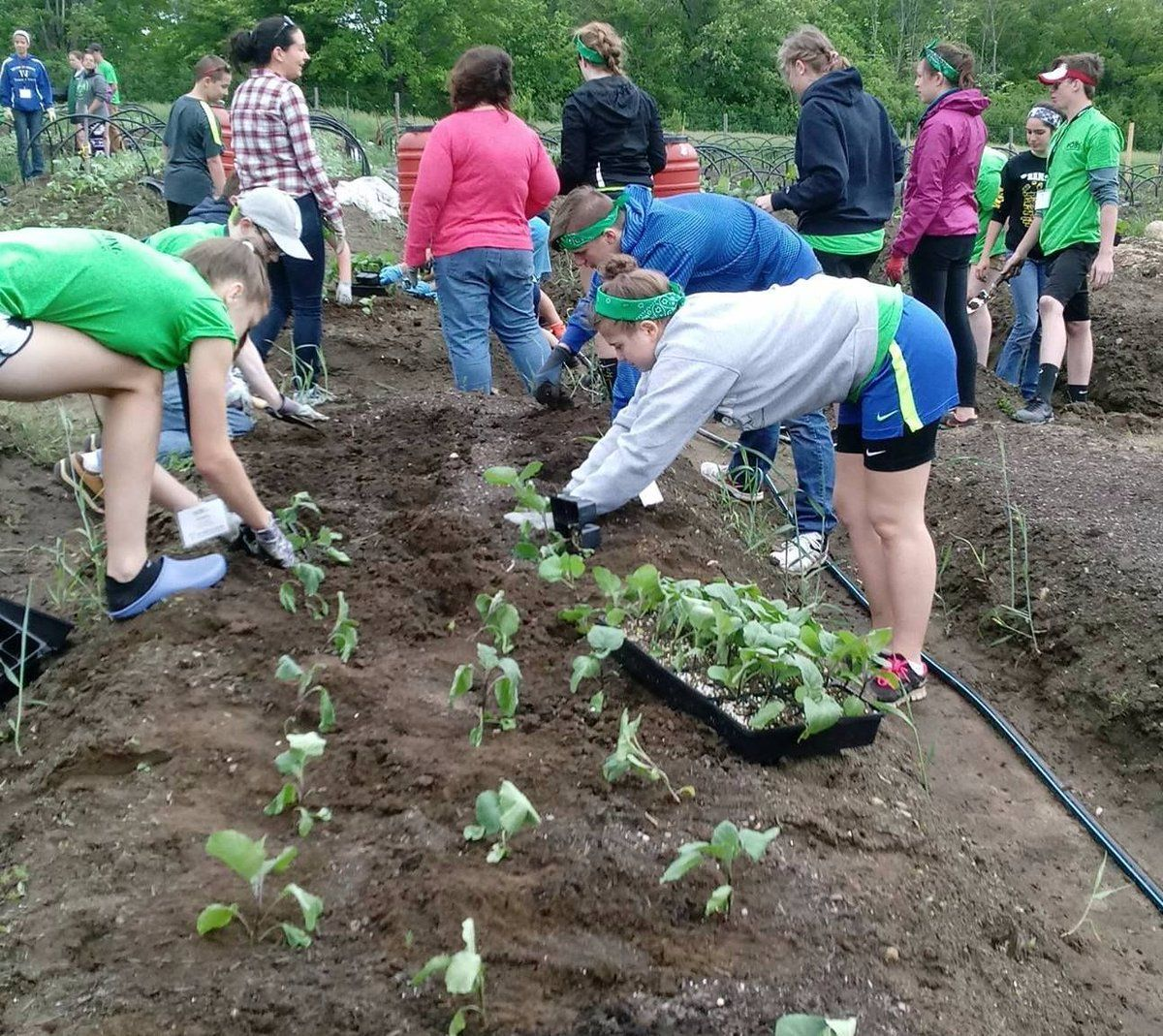 Hoby nh recently helped plant vegetables in our production