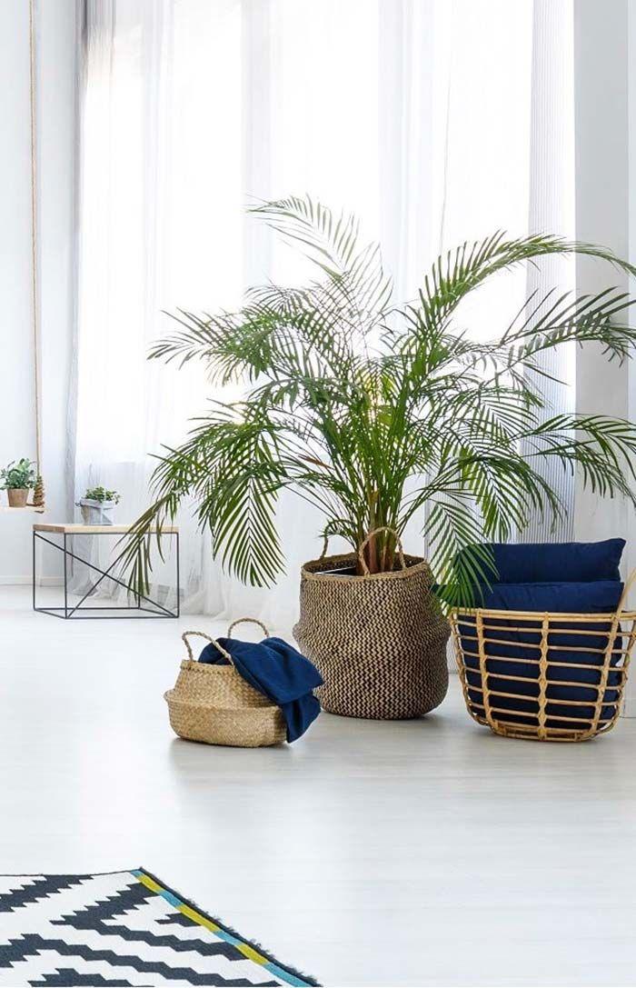 Bambu Areca Em Cesto De Vime Decoracao Plantando Ideias Ideias