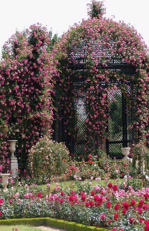 L Hay Les Roses Roseraie : roses, roseraie, Roseraie, Val-de-Marne,, Haÿ-les-Roses, Garden, Design,, Landscape,, Beautiful, Gardens