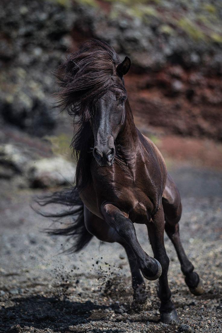 Magnifique 美しい馬 馬 美しい