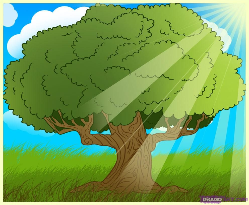 how to draw an oak tree | How to draw | Pinterest | Oak tree and ...