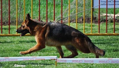 A Topline To Die For Pedigree Dog Dogs Breeds
