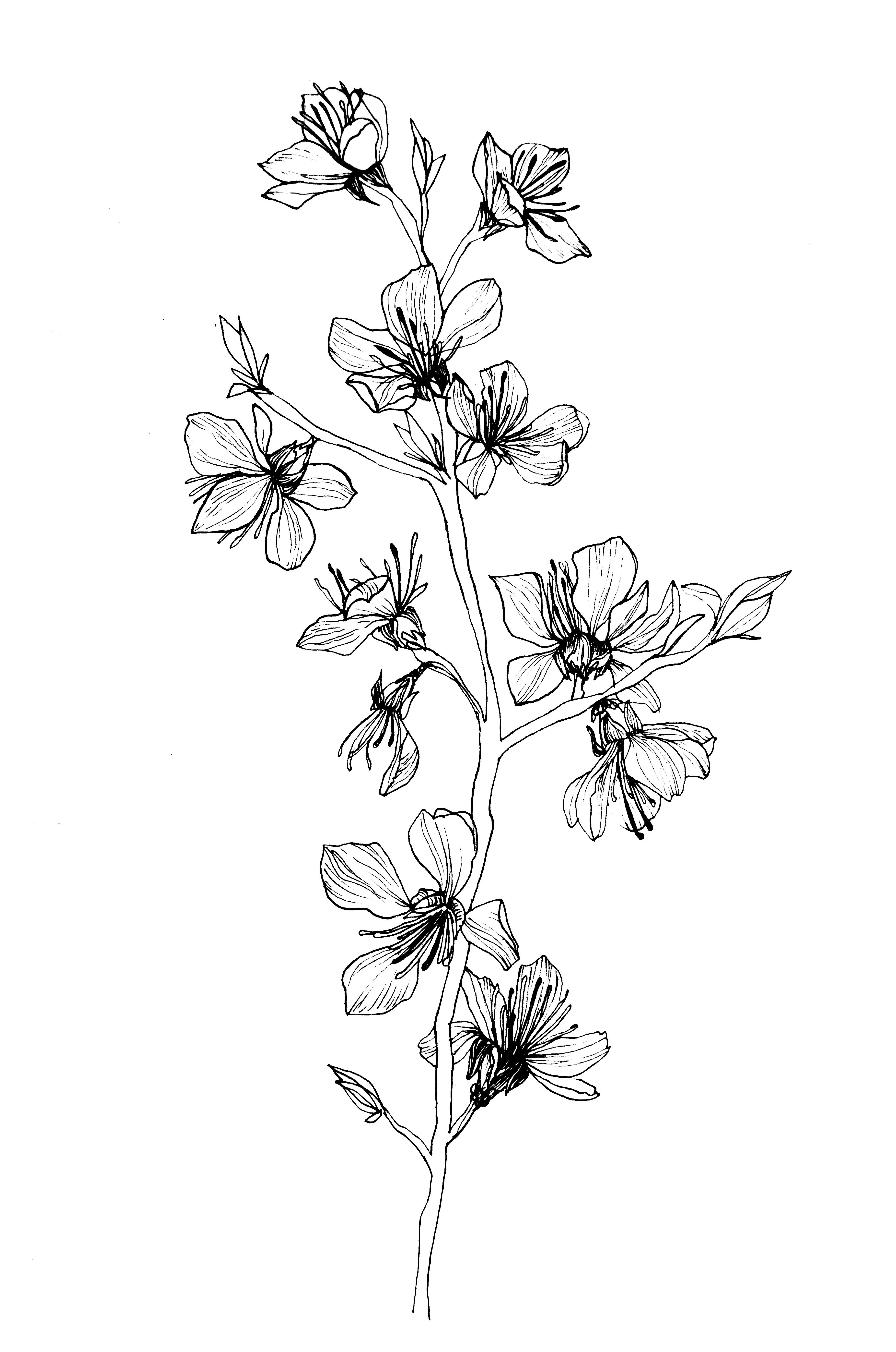 Pin By Aimi Mursyidah On Graphic Larkspur Tattoo Flower Sketches Flower Drawing