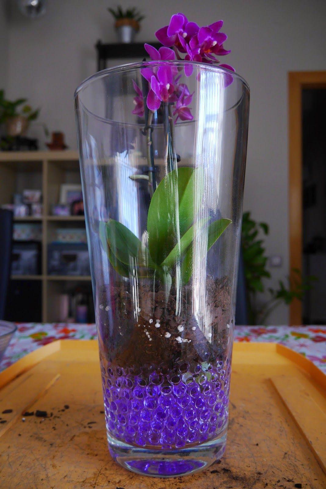 Mr Washisan Orquídea Mariposa Mini Plantada En Gel Dentro De Jarrón De Cristal Decoracion Con Plantas Artificiales Jarrón De Cristal Floreros De Cristal
